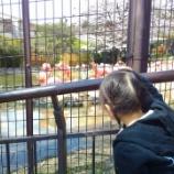 『知り合いを巡る神戸の子守り』の画像
