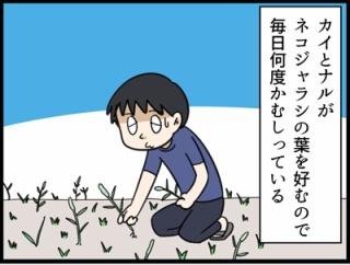 放置してよかった庭の雑草