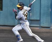 【朗報】阪神小幡、世代No.1ショートに成り上がる