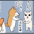 子猫を先住柴犬と猫に会わせたらどうなるか?それぞれの反応予想【2】