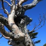 『樹木から学ぶ』の画像