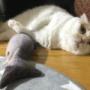 昨年買った今も猫が飽きないおもちゃ