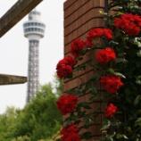 『α900で歩く横浜 薔薇の香り編』の画像