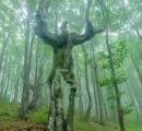 【画像】人間の形をした不気味な木が発見される・・・これは呪いだわ