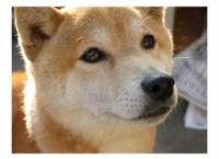 吉川七瀬の愛犬「じゅげむ」、逝く