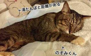 猫は気温の変化に