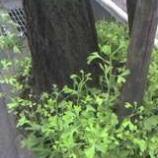 『銀杏の木』の画像