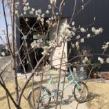 『春に思うこと・・・』の画像