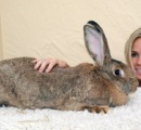 【画像】イースターで世界最大のウサギがデカすぎると話題に