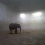 『売られていく赤ちゃん象たち』の画像