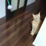 『待ちぼうけたムギと、さぁ遊ぼう!』の画像