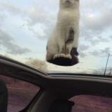 【画像】空中浮揚をするネコ、発見される