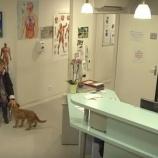 『動物病院どっきりテレビ』の画像