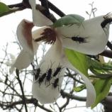 『花の香りに吸い寄せられて~』の画像