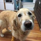 『命をかけて飼い主を守った盲導犬』の画像