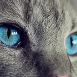 『猫の麻酔後の失明』の画像
