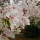 『4月9日(土)』の画像