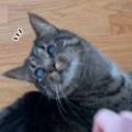 うちのネコは目が不自由だった。私がそっと手を近づけてみる → 気づいた猫はこうします…