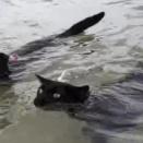元保護猫のネイサンさんとウィニーさん、二匹一緒にスイミング。