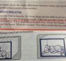 「子猫を窒息させてみよう」 インドの科学教科書が物議