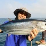 『8月 7日 釣果 カツオ3匹!! サバ大漁!!』の画像