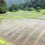 『田植え後の管理』の画像
