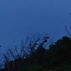 『翼手浴』の画像