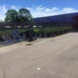 『ブルーベリー農園』の画像