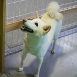 『射水店ドッグランに柴犬ちゃん大集合!!』の画像