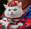 ネコもおめかし、ウクライナの民族衣装でパレード