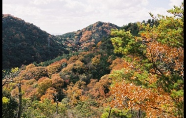 『標高256.2mの紅葉(黄葉)』の画像