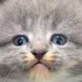 【子ネコ】 なんだかうちの床下が騒がしい。うにゃにゃにゃ~ん! → 野良猫一家が住み着いていました…