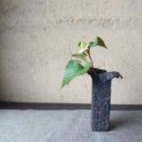 『花器 どくだみ』の画像