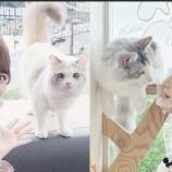 『[ノイミー] いこのいch『【もふもふ】猫カフェデートしてきました?【癒し】』メンバー反応など…』の画像