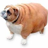 『犬の肥満』の画像