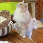 猫カフェ ねこまんまBlog
