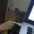 子ネコが「パソコン」のケーブルを抜いてしまう。やめてぇ! やめない!! → たたかいが始まった…