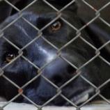 『台湾で保護動物の殺処分禁止:日本は?』の画像