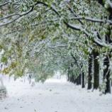 『湿って重い雪Damp and heavy snow.』の画像