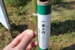 コスモス畑で1つ10円!~季節の花、ゲットできます!~