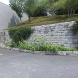 『東大和市立狭山緑地のやまゆり』の画像