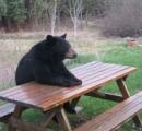 森で2日間迷子になったハサウェイ(3)、クマに護られてた