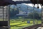 京阪電車の河内森駅ホームからの景色が、絶景!~向こう側の景色に癒されるような感じになってる~