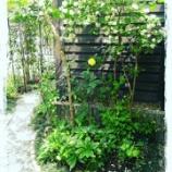 『裏庭のバイカウツギ♪』の画像