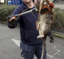 【画像】ロンドンのドブネズミが超巨大化 これブラッドボーンに出てただろ