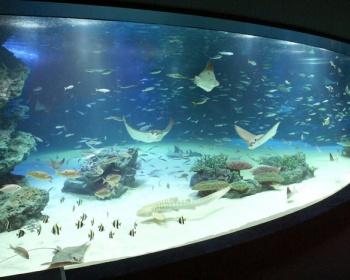 サンシャイン水族館の魚24種1235匹が酸素不足で死亡 一部魚の病気治療のため酸素供給の装置を停止し欠乏