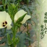 『あき葵』の画像