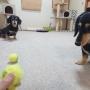 お気に入りボール