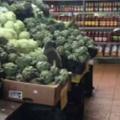 【ネコ】 スーパーに行ったら野菜売り場に何かいる。もふもふ、モグモグ♪ → それはビーガン猫でした…