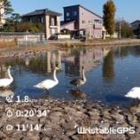 『白鳥をみながら瓢湖ランニング』の画像
